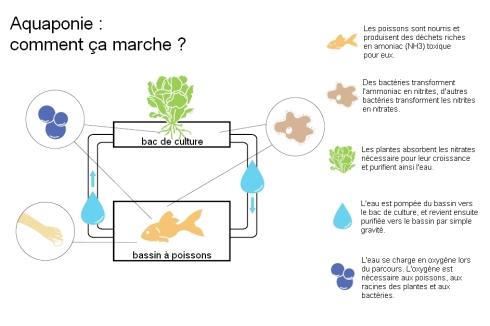 aquaponie-principes-grande