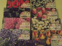 Des bulbes fleuries prêts à être plantés !
