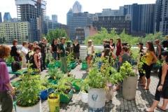 Agriculture_urbaine_2012_01