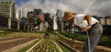 urban_agriculture_530_02